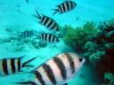 Fisch gestreift.jpg