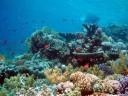 Korallenlandschaft.jpg