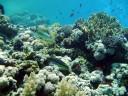 Korallenlandschaft2.jpg