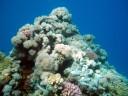 Korallenstock.jpg